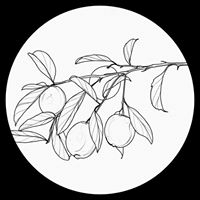 Logo empresa: tatuajes botánicos