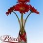 Logo empresa: petale